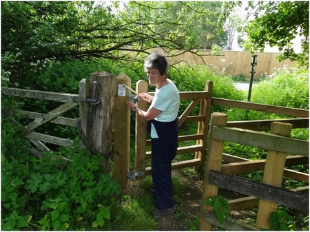 Anne Partridge affixes the OFS plaque on a new kissing gate on the d'Arcy Dalton Way at Lyneham